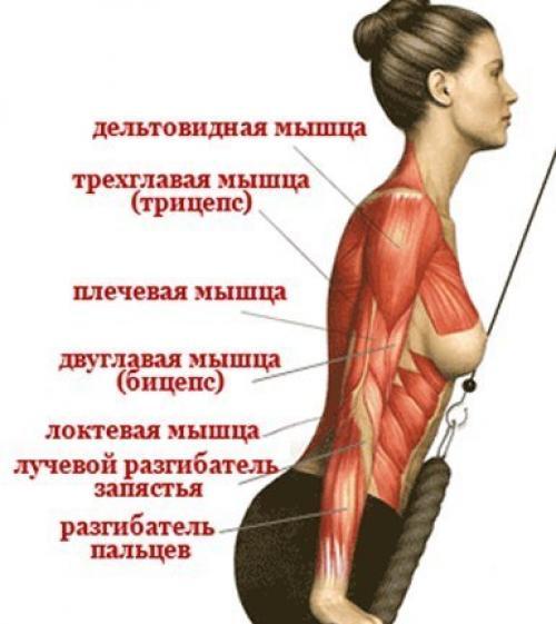 Упражнения на мышцы рук в домашних условиях для девушек - Belbera.Ru
