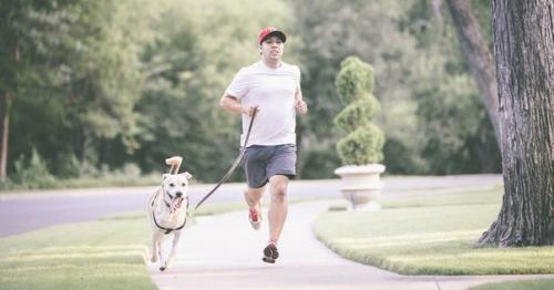 Упражнения для собаки. Нагрузки для собаки.