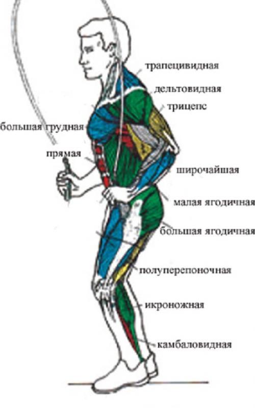 Прыжки на скакалке для ягодиц. Воздействие занятий скипингом на мускулы человека