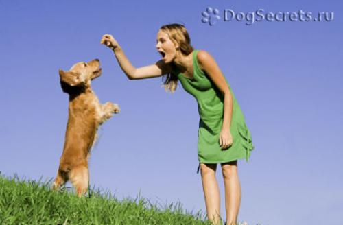 Упражнения для собак мелких пород. Как начинать тренировки собаки?