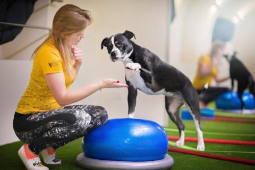 Упражнения для собак для спины. Дог-фитнес: шесть базовых упражнений