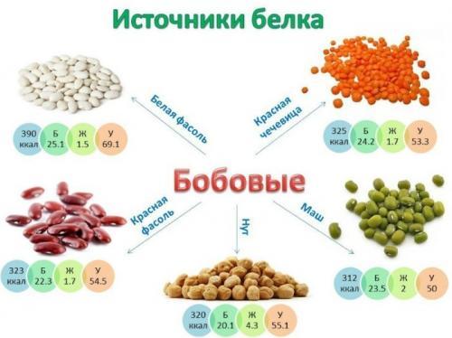 Таблица богатых белком продуктов. Какие продукты содержат белок в большом количестве