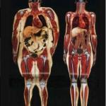 Снимок просканированного тела 115 килограммовой и 55 килограммовой девушки.