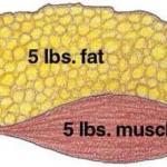 Можно ли одновременно жечь жир и наращивать мышечную массу?