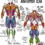 Упражнения на все группы мышц для бодибилдинга и фитнеса в GYM Boss.