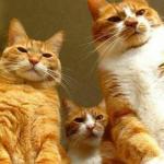 Семь заповедей настоящего кота: