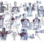 Комплекс упражнений на плечи: особенности прокачки дельт.