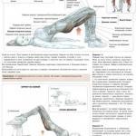 Мостик лежа:   Данное упражнение доступно для всех и очень полезно.